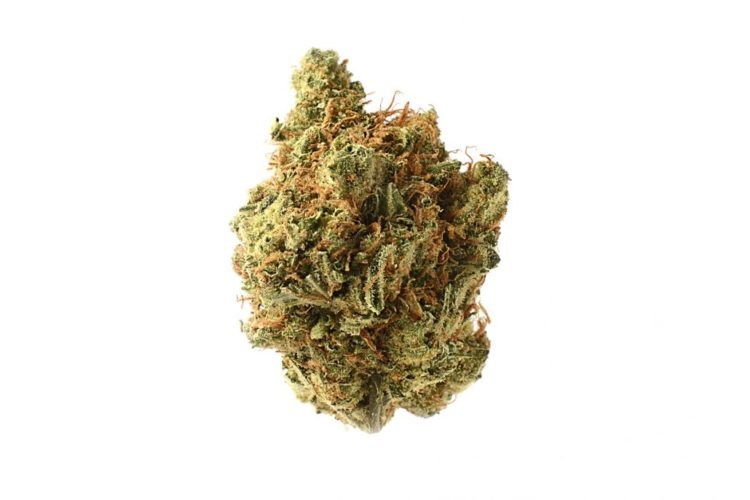 Cannabis - Jack Herer